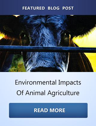 Environmental Impacts Of Animal Agriculture