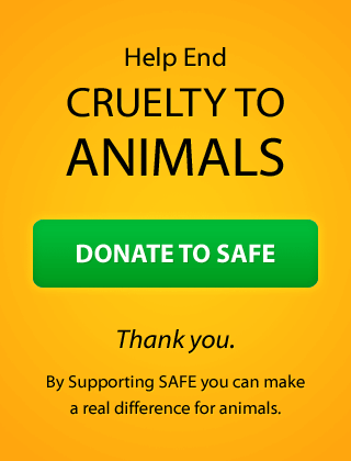Help end cruelty to animals. Donate to SAFE.