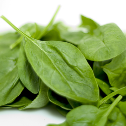 spinach 250